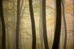 Morning Fog, Friston Forest (Alan MacKenzie) Tags: autumn trees mist fall fog forest woodland sussex southdowns fristonforest