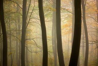 Morning Fog, Friston Forest