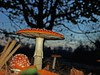 mondi inesplorati (chiaramargaret) Tags: wood nature strange danger forest photo reflex flash olympus erba rosso prato stay bosco strana fungo pericoloso surreale velenoso fantay olympuse510 chiaramargaretcaccia