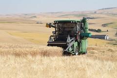 Spillman Harvest 2012 (cahnrsWSU) Tags: wheat grain harvest wsu ag agriculture spillman washingtonstateuniversity agriculturalsciences cahnrs studenthelp spillmanharvest2012