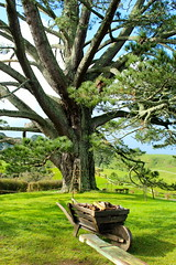The Party Tree (Electro_Girlie) Tags: newzealand green set lotr lordoftherings hobbit movieset wheelbarrow hobbiton matamata theshire partytree {vision}:{outdoor}=096 {vision}:{mountain}=0646 {vision}:{sky}=0622 {vision}:{plant}=0969