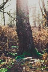 IMG_1562.jpg (Adam_Marshall) Tags: uk winter england sun tree nature forest landscape moss woods trunk holme