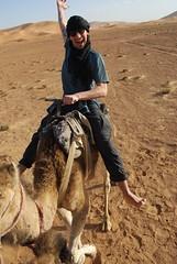 Steve love camel