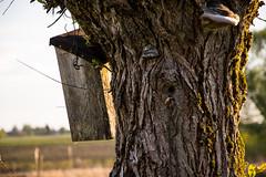 Vogelhuschen (emesvau) Tags: vogelhuschen d3200 ammertal unterjesingen