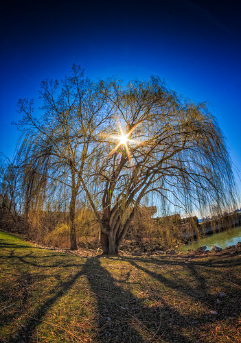 """Shadows of the Willow • <a style=""""font-size:0.8em;"""" href=""""http://www.flickr.com/photos/76866446@N07/13930137532/"""" target=""""_blank"""">View on Flickr</a>"""