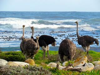 Cape Town Luxury Safari 5