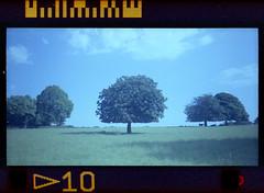 horse chestnut (pho-Tony) Tags: color colour star iso200 photo shift system cast 200 automatic pointandshoot 24mm agfa expired hue aps compact advantix obsolete advanced c41 f64 advancedphotosystem kodakadvantix tetenal ektanar kodakadvantixf350 treehorsechestnut