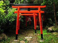 (-Michik-) Tags: red mountains green nature japan temple japanese  nippon  torii   nihon mistic      taisanji sanshinzan