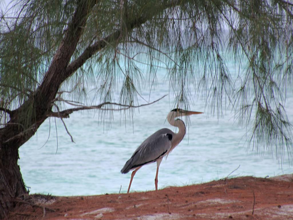 アルダブラ環礁の画像 p1_33
