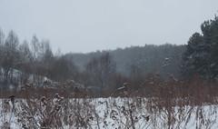 _MG_6818 (annabutova) Tags: nature naturephotography naturelover natureonly naturephoto naturelovers natureandnothingelse landscape landscapephotography landscapephoto landscapelover moscow minimalism minimalmood minimallove minimalist