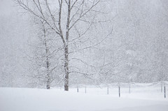 (amy20079) Tags: nikond5100 newengland snow winter trees february rural country fence snowstorm
