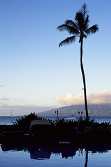 West Maui morning (pabs35) Tags: hawaii maui ocean pacific film believeinfilm 35mm fuji fujifilm fujichrome velvia velvia50 pentax mx pentaxmx palmtree palm lanai silhouette