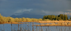 pond wetlands area near utah lake2 (houstonryan) Tags: lake print photography utah pond photographer ryan near may houston images photograph license wetlands sell 19 freelance 2013 houstonryan