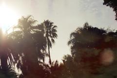 jardn botnico (julieta_pan) Tags: trees tree rboles rbol jardinbotanico canon60d