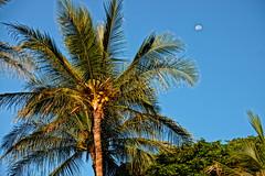 skyward (CherbellaW) Tags: sky moon palms hawaii coconut maui