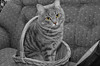 Ol' Bright Eyes (SDewittPhoto) Tags: pet white black color colour cute cat fun nikon feline domestic pussycat selective impressedbeauty flickrdiamond d7000