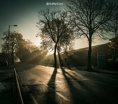 Tree of Life (0-1-6-1) Tags: morning autumn trees sunlight manchester streetphotography canon60d