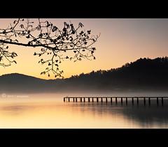 C o l d F u s i o n (AnthonyGinmanPhotography) Tags: tree sunrise branch glow jetty nojiriko olympuse30 olympus1122mmf28