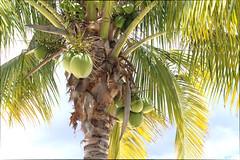 IMG_2601 (federica.piersimoni) Tags: blogger mauritius blogtour maublogtour13