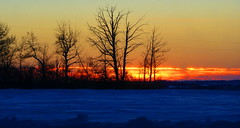 The beauty of a Prairie winter sunset (peggyhr) Tags: blue trees sunset orange snow canada black yellow silhouettes alberta mauve prairies outstanding thegalaxy 50faves peggyhr heartawards flickrawardgroup 100commentgroup mygearandme mygearandmepremium thefreegallery ringexcellence blinkagain redgroupno1 niceasitgets~level1 weloveyourphotography~level1~ frameit~level01~ frameit~level02~ sunsetssunrisesilovethemall p1110179a httpwwwflickrcomgroupswangsendepoolwith11768818724photo11768818724