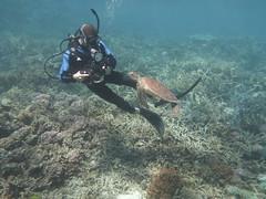 Old good times (Makoto Mania) Tags: turtle australia scubadiving aussie reef greatbarrierreef
