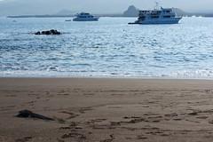 "_DSC6740 - Version 2  ""Marine Iguana"" Iguana Marina and the   Galapagos  Santiago/Puerto Egas  area shoreline (ChanHawkins) Tags: santiago boats puerto am galapagos area april eden sat egas 13 aidamaria galapagos shoreline santiagopuerto"