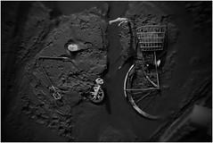 井の頭池の底で発見された自転車の化石 (Masahiko Kuroki (a.k.a miyabean)) Tags: bw bicycle pond 井の頭公園 自転車 driedup inogashirapark 井の頭池 fujixe1 fujifilmsuperebcxf2841855mm かいぼり inogashirapond