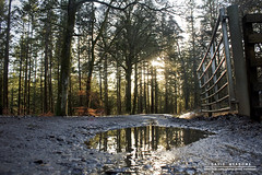 Reflections (DMeadows) Tags: road wood trees sunlight colour reflection leaves metal pine forest woodland reflections walking point puddle scotland woods gate track cone forestry walk trail reflect perth and dunkeld commission kinross davidmeadows dmeadows davidameadows dameadows