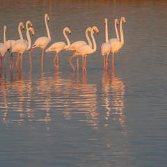 23/100 sunrise flamingoes (stacey catherine) Tags: blue nature square flamingo capetown westerncape woodbridgeisland 100xthe2014edition 100x2014