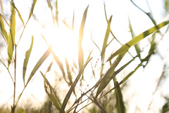 Let the light in! (jdkvirus) Tags: light abstract green lensbaby canon southafrica 7d overexposed nocrop jk 2014 canon7d lensbabycomposer