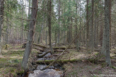 River path at Torronsuo (timohannukkala) Tags: park nature finland spring national fi riverpath tammela torronsuo d7100 tavastiaproper