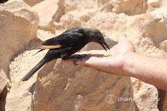 G2 - Qumran - Massada - Mar Morto - Túnel do Muro das Lamentações