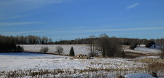 IMG_0009_Pn Winter farmlands (jgagnon63@yahoo.com) Tags: barkriver deltacountymi farmlands snow february agriculture farmfield landscape panorama