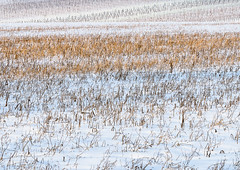 WitherSoft.jpg (Klaus Ressmann) Tags: klaus ressmann agoettelsbrunn austria abstract nikon snow vineyard winter design flcabsnat minimal softtones white wither klausressmann