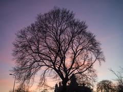 20161229-0033 (www.cjo.info) Tags: edinburgh europe europeanunion leith leithlinks mzuiko m43 m43mount microfourthirds olympus olympusmzuikodigital17mmf18 olympuspenepl3 olympuspenlite scotland unitedkingdom westerneurope zuiko digital evening eveninglight flora plant sillouette sky sunset tree