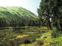 夢幻湖 Menghuan Lake (Y.P. Jhou) Tags: nature taiwan travel landscape forest grass tress mountain outdoor 戶外 山 旅遊 台灣 夢幻湖 台北 風景 樹