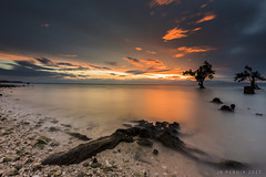 -Stand the Test of Time- (Jose Rey S. Pernia) Tags: sky red benro nikon firecrest singhray ocean water d750 rocks trees mangrooves roots landscape seascapes nature beauty sun sunrise philippines sarangani mindanao