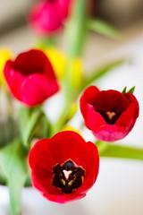 079/365 Tulips...