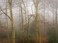 Crowell Wood (Damian_Ward) Tags: damianwardphotography ©damianward damianward oxfordshire trees chilterns chilternhills thechilterns fog mist