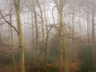 Crowell Wood