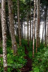 Misty Woods at Mt. Mitchell (Deb Scannell) Tags: fineartcollectionwork mtmitchell blueridgeparkway portfolio trees landscape macroshots