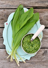 bear's onion pesto. (Zoryanchik) Tags: allium aromatic background bear beargarlic bears blossom bunch dish flower food forest fresh freshness garlic green gypsy healing healthy herb herbal kitchen leaf leek loeffel onion onions organic plant ramson rope savage seasoning soup spice spinach spring springtime terrine tree ursinum vegetable vegetation vernacular victorialis vitamin white wild wood
