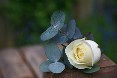 Wedding Flowers - Buttonhole (EJ Bergin) Tags: flowers buttonhole weddingflowers wwwamandarefoycouk