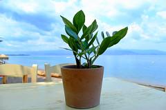 green & blue (Katrinitsa) Tags: blue sea plant green beach landscape pot greece kamena vourla fthiotida