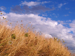 color of august (All Shine) Tags: blue light sky plants nature colors beautiful grass weather clouds composition landscape photography countryside outdoor ngc expressions meadow impressions