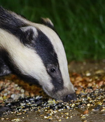 ratty and mole looked everywhere for badger... but he had been murdered by the tories (explored) (Dawn Porter) Tags: