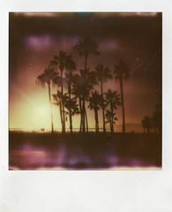Venice beach sunset (teacup_dreams) Tags: california venice trees sunset usa beach america project polaroid los angeles palm impossible