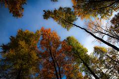 trees in autumn (bernd obervossbeck) Tags: autumn trees tree herbst bume baum sauerland laubwald perpektive herbstfarben colouredleaves hochsauerland jagdhaus coloursofautumn buntebltter mygearandme mygearandmepremium