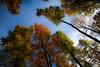 trees in autumn (bernd obervossbeck) Tags: autumn trees tree herbst bäume baum sauerland laubwald perpektive herbstfarben colouredleaves hochsauerland jagdhaus coloursofautumn bunteblätter mygearandme mygearandmepremium