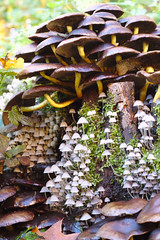Fungi (dvanzuijlekom) Tags: fall mushrooms moss october arnhem herfst thenetherlands fungus achtertuin radarweg 2013 canonef50mmf18mkii hackerspace canoneos7d hack42 kkn6 buitenplaatskoningsweg kampkoningswegnoord